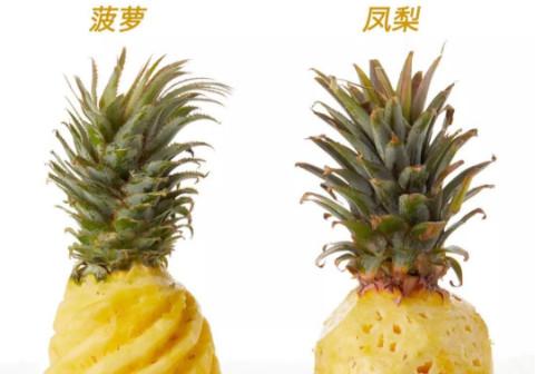 菠萝和凤梨区别图片,菠萝和凤梨区别图片说明