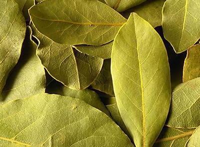月桂叶和香叶的区别秋天的水果,名字不同,本质没有明显区别
